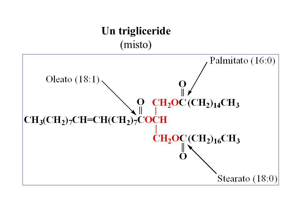 Con il termine acidi grassi (abbreviazione FA, dall inglese Fatty Acids) si indicano tutti gli acidi monocarbossilici alifatici aciclici (cioè costituiti da molecole che non presentano catene chiuse ad anello) Possono essere saturi (se la loro molecola presenta solo legami singoli C  C) o insaturi (se presentano doppi legami C=C) Sono gli ingredienti costitutivi di quasi tutti i lipidi complessi e dei grassi vegetali e animali Acidi grassi