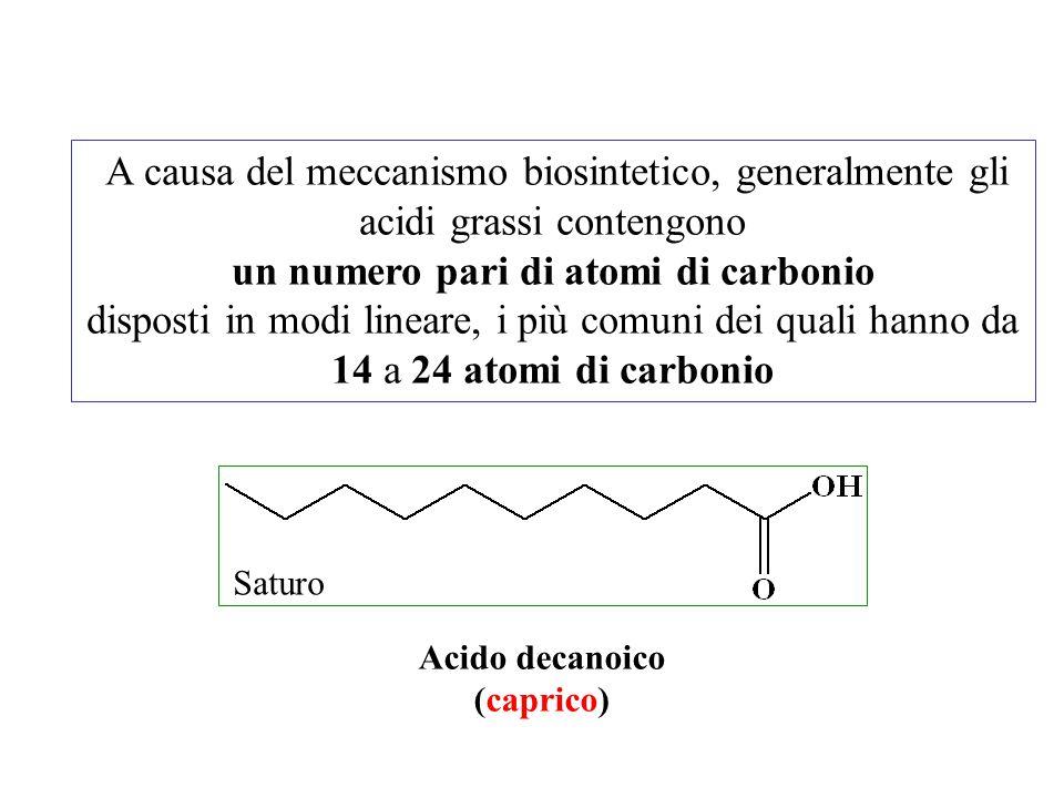 A causa del meccanismo biosintetico, generalmente gli acidi grassi contengono un numero pari di atomi di carbonio disposti in modi lineare, i più comu