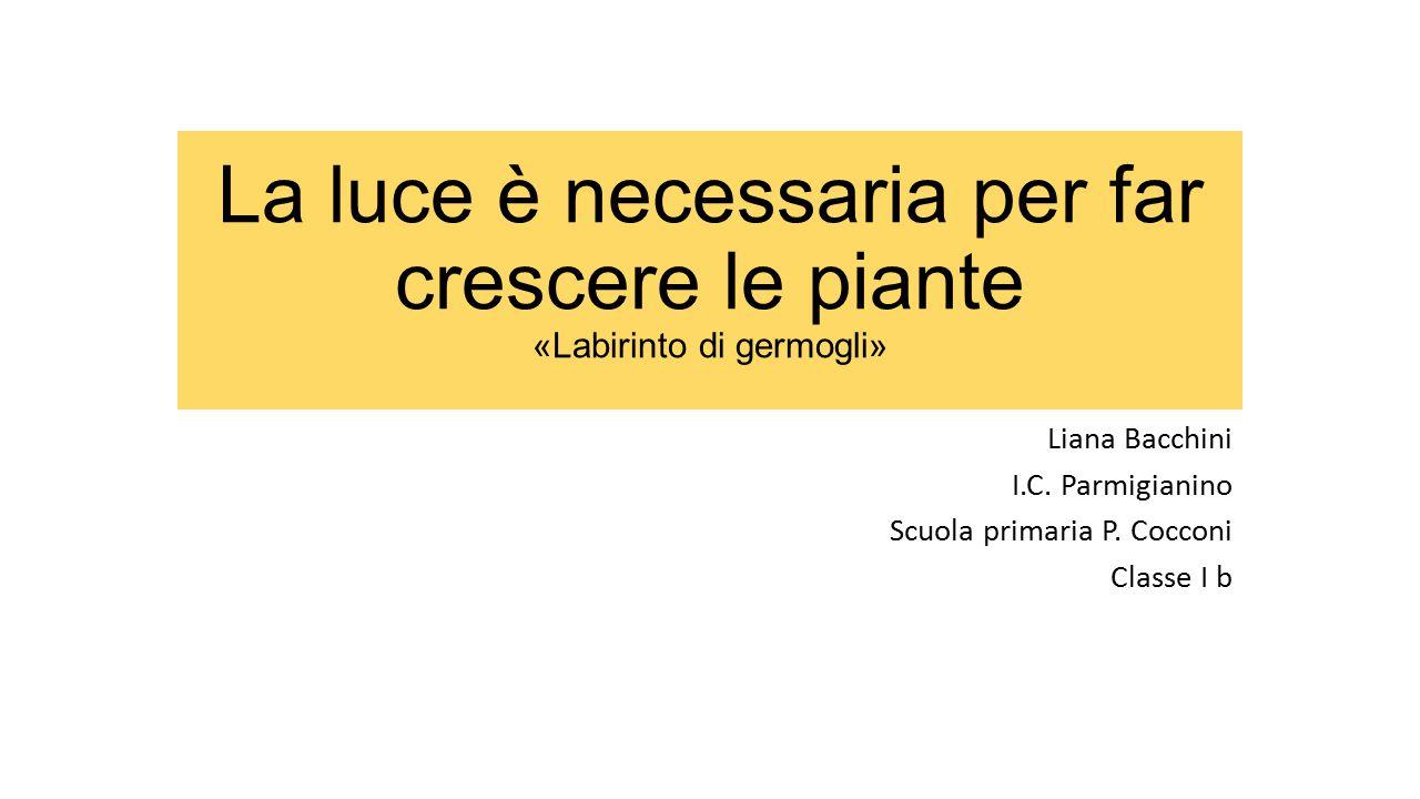 La luce è necessaria per far crescere le piante «Labirinto di germogli» Liana Bacchini I.C. Parmigianino Scuola primaria P. Cocconi Classe I b