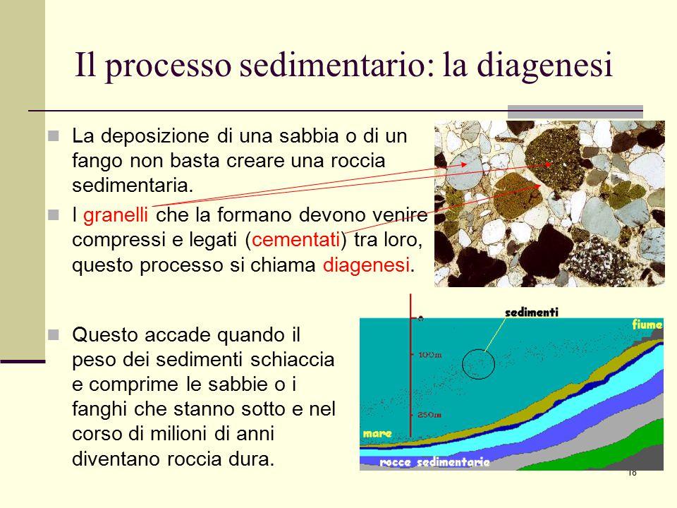 18 Il processo sedimentario: la diagenesi La deposizione di una sabbia o di un fango non basta creare una roccia sedimentaria. I granelli che la forma