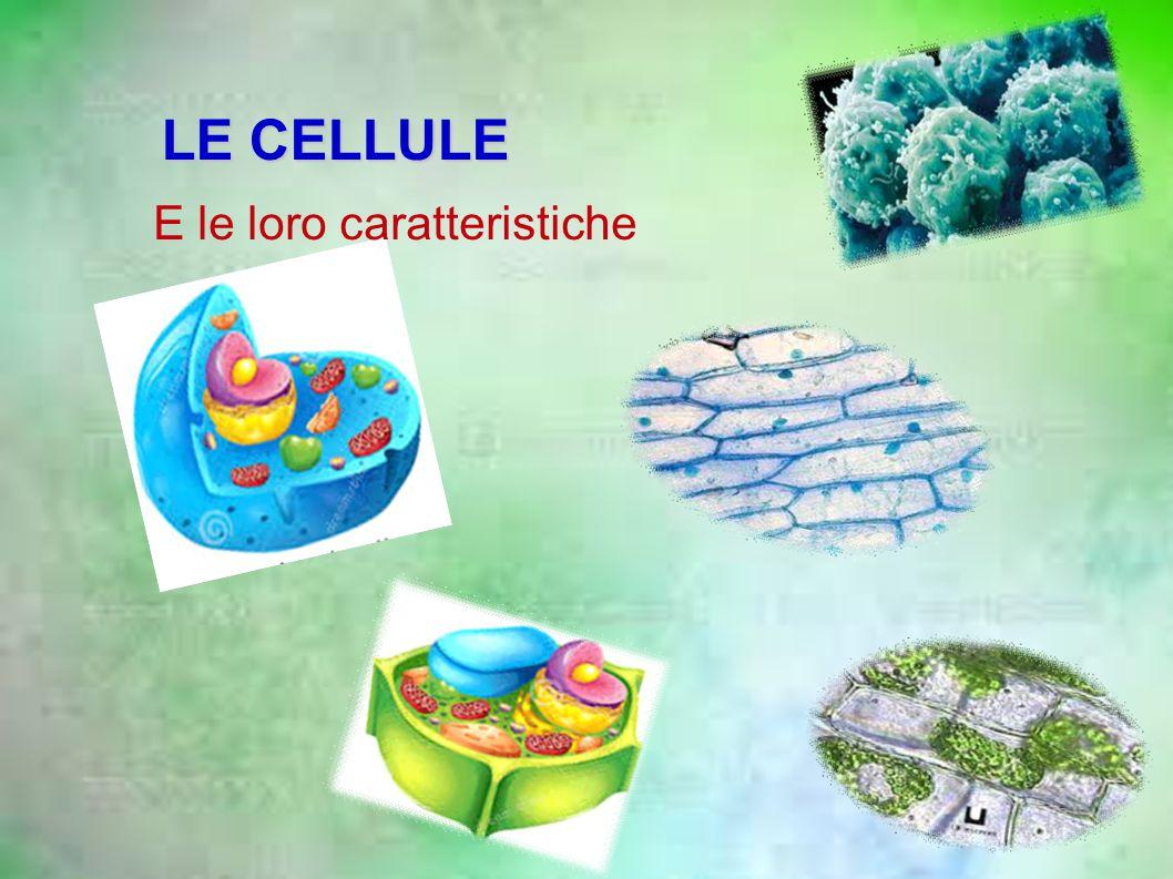 LE CELLULE E le loro caratteristiche