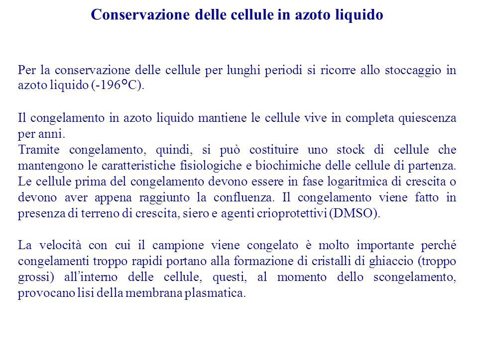 Conservazione delle cellule in azoto liquido Per la conservazione delle cellule per lunghi periodi si ricorre allo stoccaggio in azoto liquido (-196°C