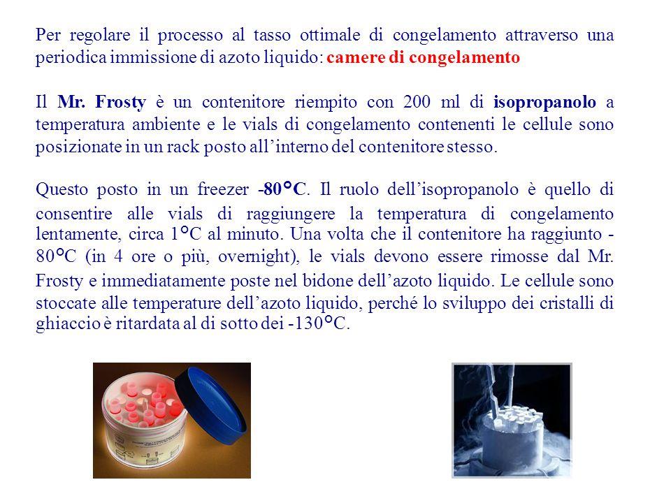 Per regolare il processo al tasso ottimale di congelamento attraverso una periodica immissione di azoto liquido: camere di congelamento Il Mr. Frosty