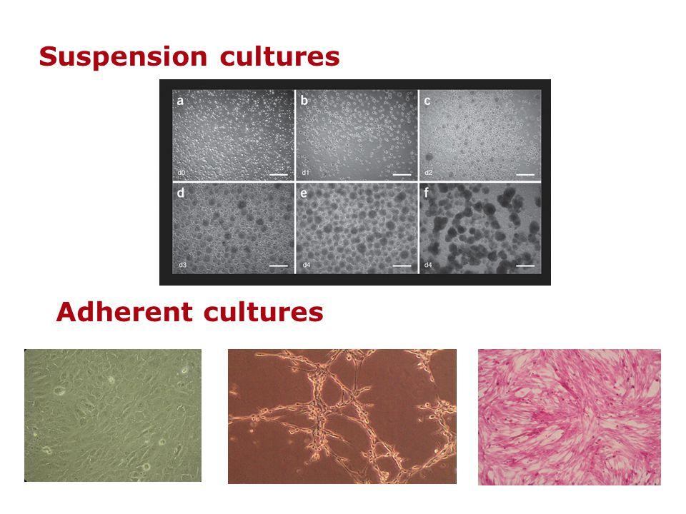 Suspension cultures Adherent cultures