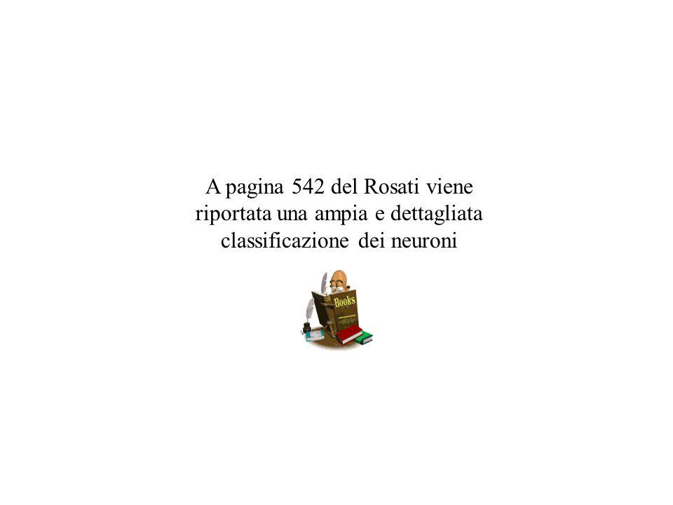 A pagina 542 del Rosati viene riportata una ampia e dettagliata classificazione dei neuroni