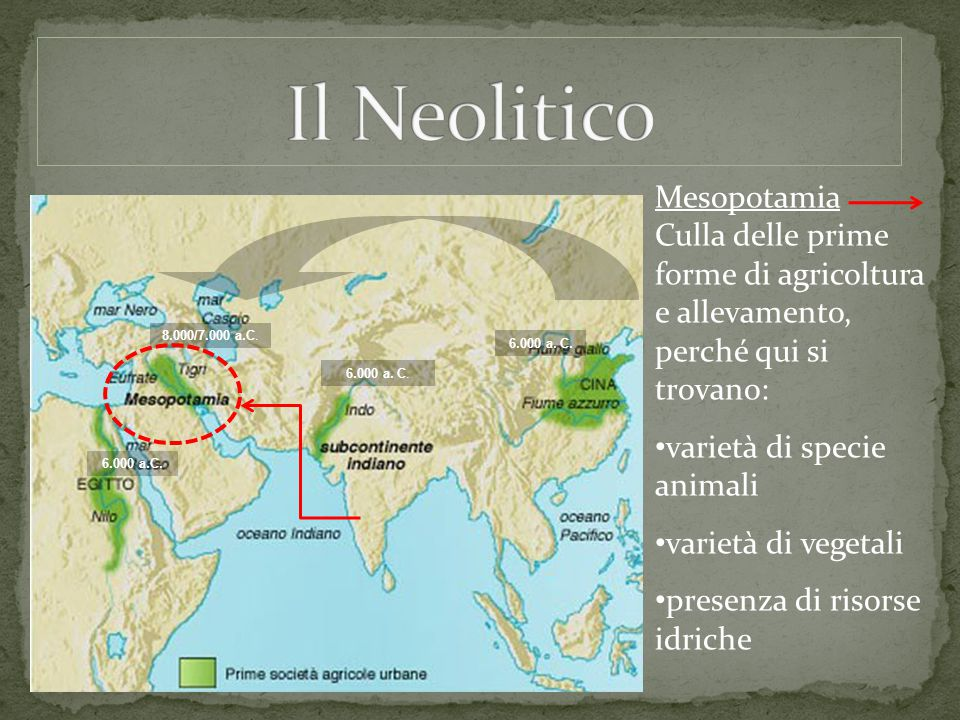 Mesopotamia Culla delle prime forme di agricoltura e allevamento, perché qui si trovano: varietà di specie animali varietà di vegetali presenza di ris