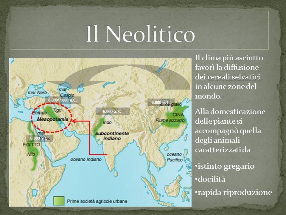 cereali selvatici Il clima più asciutto favorì la diffusione dei cereali selvatici in alcune zone del mondo. 8.000/7.000 a.C. 6.000 a. C. Alla domesti