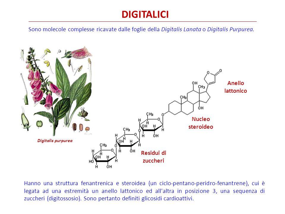 DIGITALICI Residui di zuccheri Nucleo steroideo Anello lattonico Sono molecole complesse ricavate dalle foglie della Digitalis Lanata o Digitalis Purpurea.