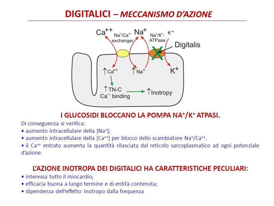 DIGITALICI – MECCANISMO D'AZIONE I GLUCOSIDI BLOCCANO LA POMPA NA + /K + ATPASI.