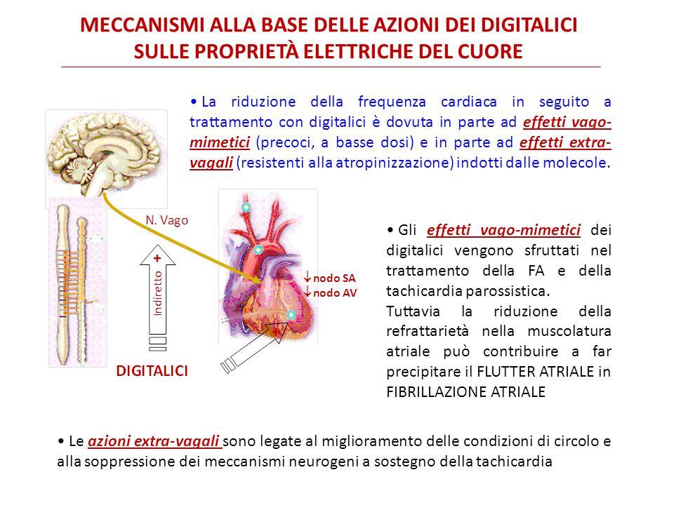 MECCANISMI ALLA BASE DELLE AZIONI DEI DIGITALICI SULLE PROPRIETÀ ELETTRICHE DEL CUORE La riduzione della frequenza cardiaca in seguito a trattamento con digitalici è dovuta in parte ad effetti vago- mimetici (precoci, a basse dosi) e in parte ad effetti extra- vagali (resistenti alla atropinizzazione) indotti dalle molecole.
