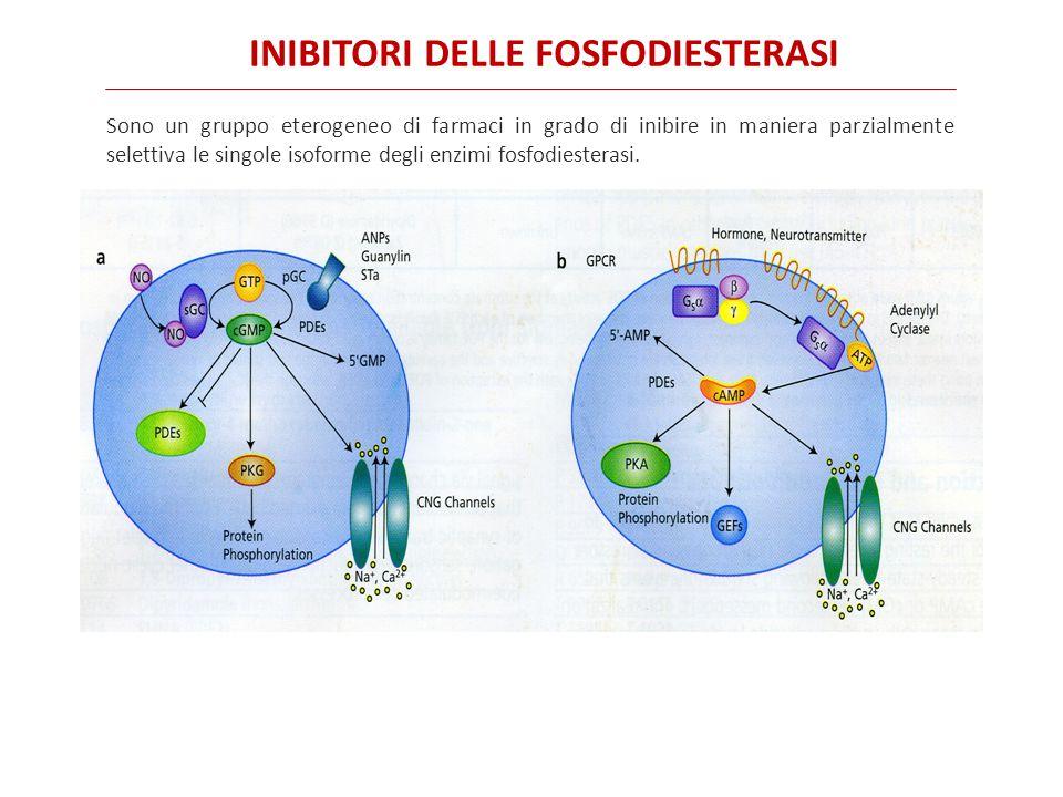 INIBITORI DELLE FOSFODIESTERASI Sono un gruppo eterogeneo di farmaci in grado di inibire in maniera parzialmente selettiva le singole isoforme degli enzimi fosfodiesterasi.