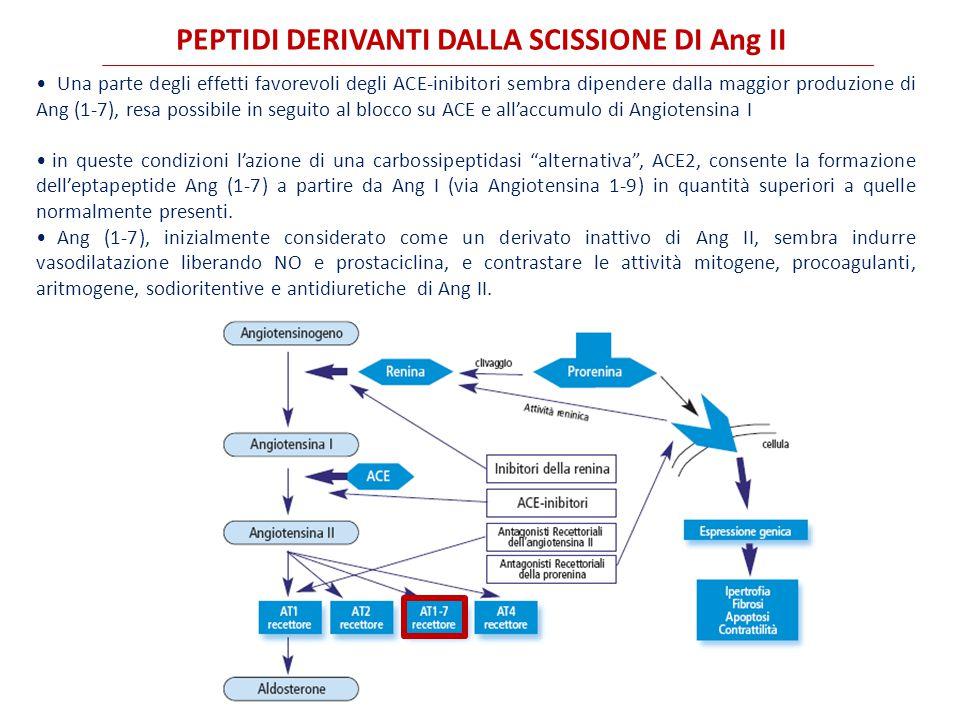 PEPTIDI DERIVANTI DALLA SCISSIONE DI Ang II Una parte degli effetti favorevoli degli ACE-inibitori sembra dipendere dalla maggior produzione di Ang (1-7), resa possibile in seguito al blocco su ACE e all'accumulo di Angiotensina I in queste condizioni l'azione di una carbossipeptidasi alternativa , ACE2, consente la formazione dell'eptapeptide Ang (1-7) a partire da Ang I (via Angiotensina 1-9) in quantità superiori a quelle normalmente presenti.