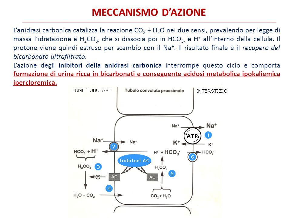 L'anidrasi carbonica catalizza la reazione CO 2 + H 2 O nei due sensi, prevalendo per legge di massa l'idratazione a H 2 CO 3- che si dissocia poi in HCO 3- e H + all'interno della cellula.