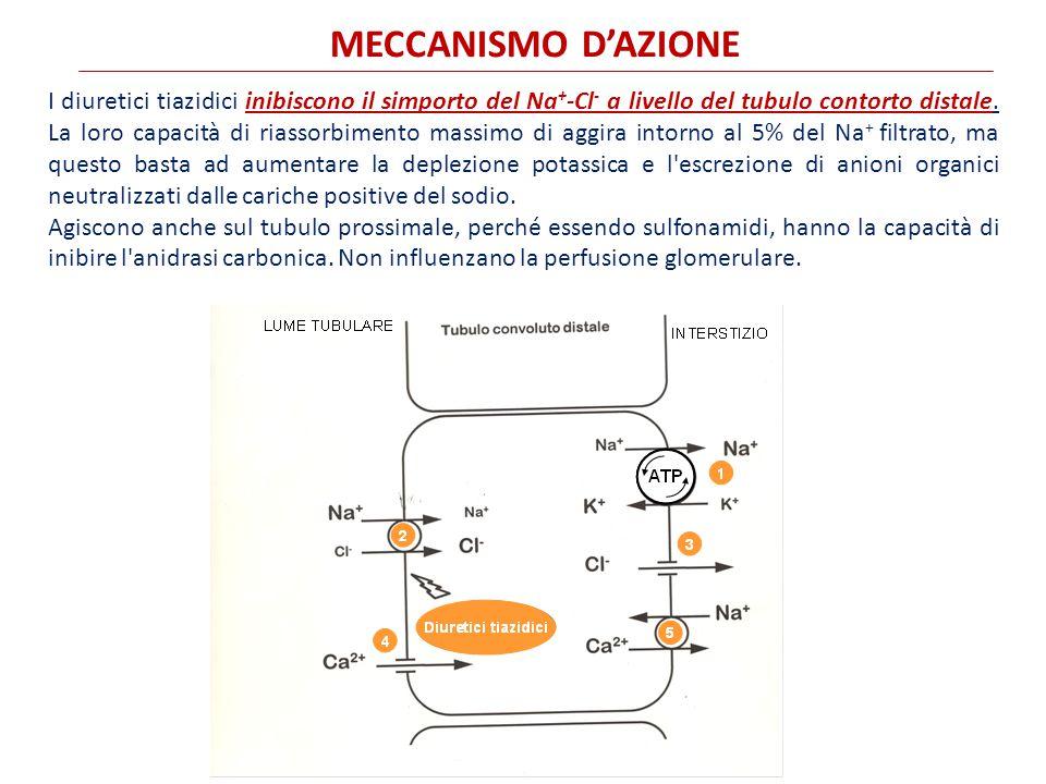 MECCANISMO D'AZIONE I diuretici tiazidici inibiscono il simporto del Na + -Cl - a livello del tubulo contorto distale.