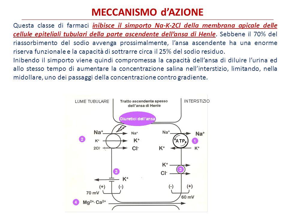 MECCANISMO d'AZIONE Questa classe di farmaci inibisce il simporto Na-K-2Cl della membrana apicale delle cellule epiteliali tubulari della parte ascendente dell'ansa di Henle.