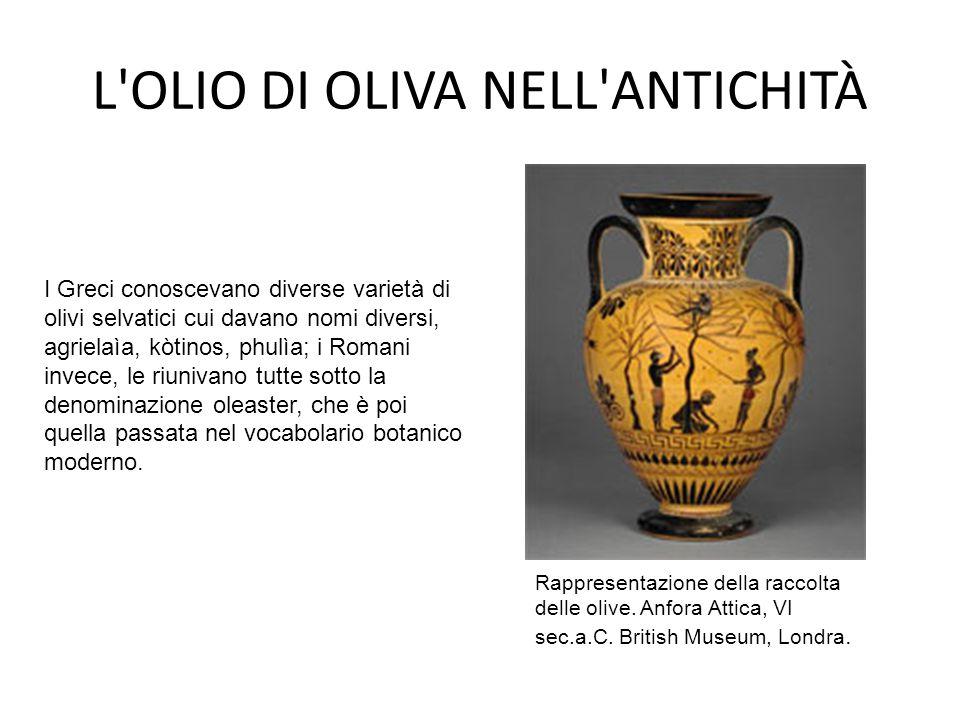 L'OLIO DI OLIVA NELL'ANTICHITÀ Rappresentazione della raccolta delle olive. Anfora Attica, VI sec.a.C. British Museum, Londra. I Greci conoscevano div