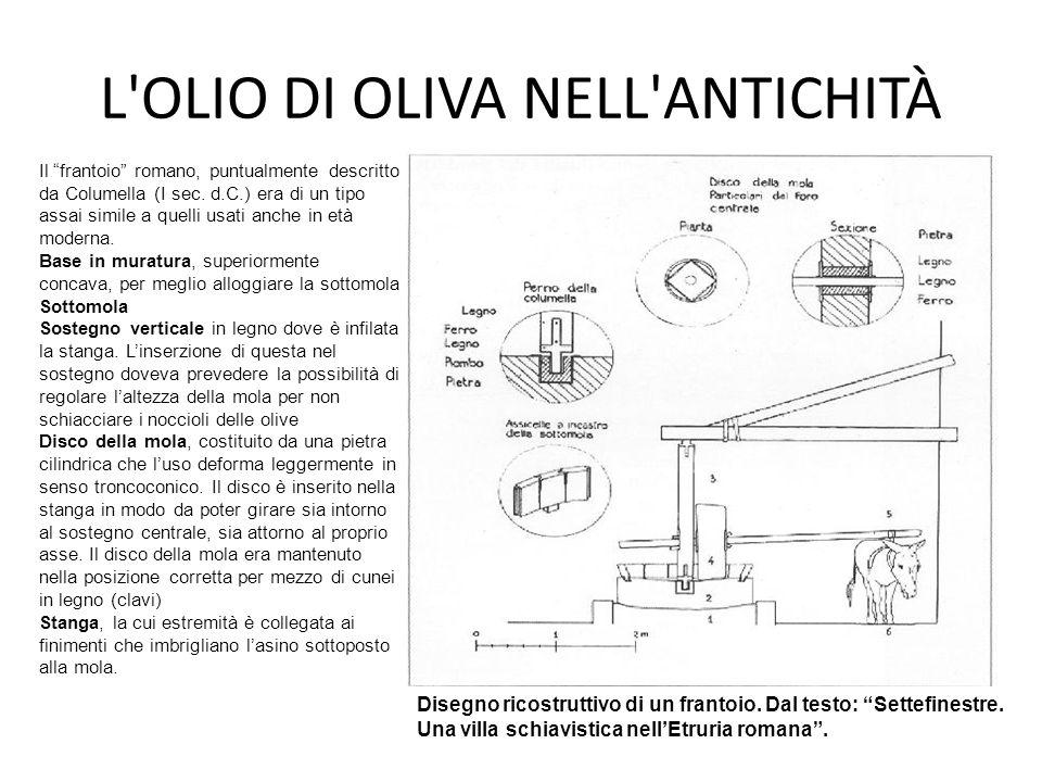 """L'OLIO DI OLIVA NELL'ANTICHITÀ Disegno ricostruttivo di un frantoio. Dal testo: """"Settefinestre. Una villa schiavistica nell'Etruria romana"""". Il """"frant"""