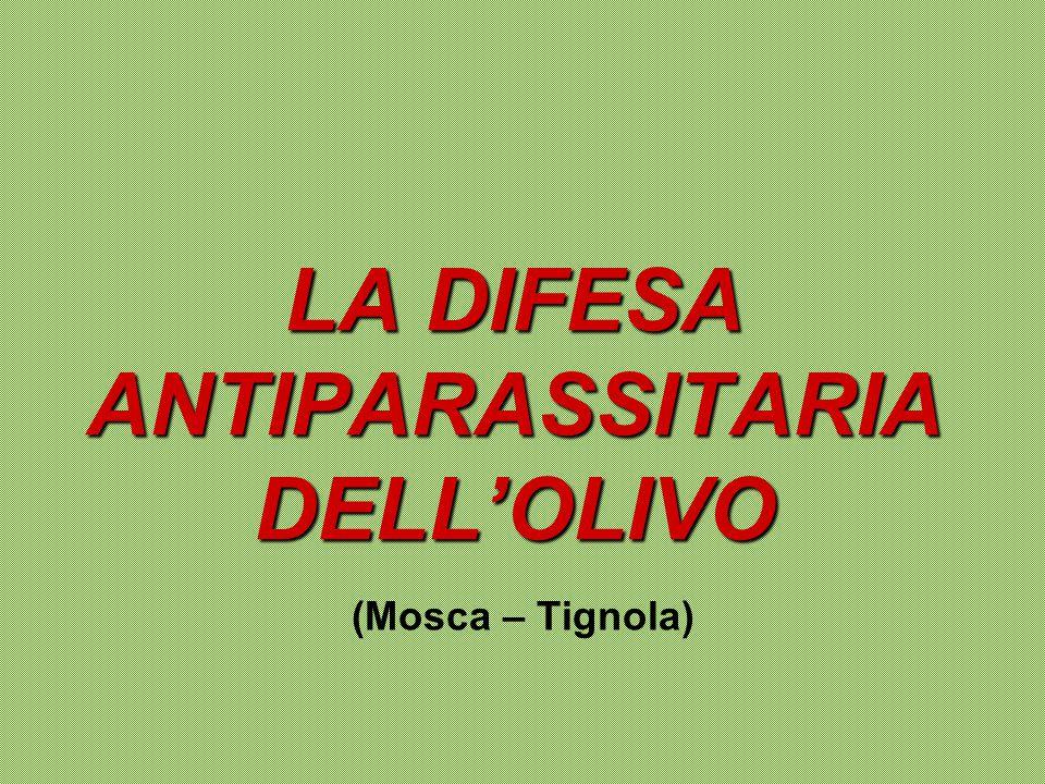 PARASSITI NATURALIINSETTI Mosca dell'olivo Tignola Oziorrinco Cocciniglia FleotriboFUNGHI Occhio di pavone Verticillosi Carie del legnoBATTERI Rogna dell'olivo