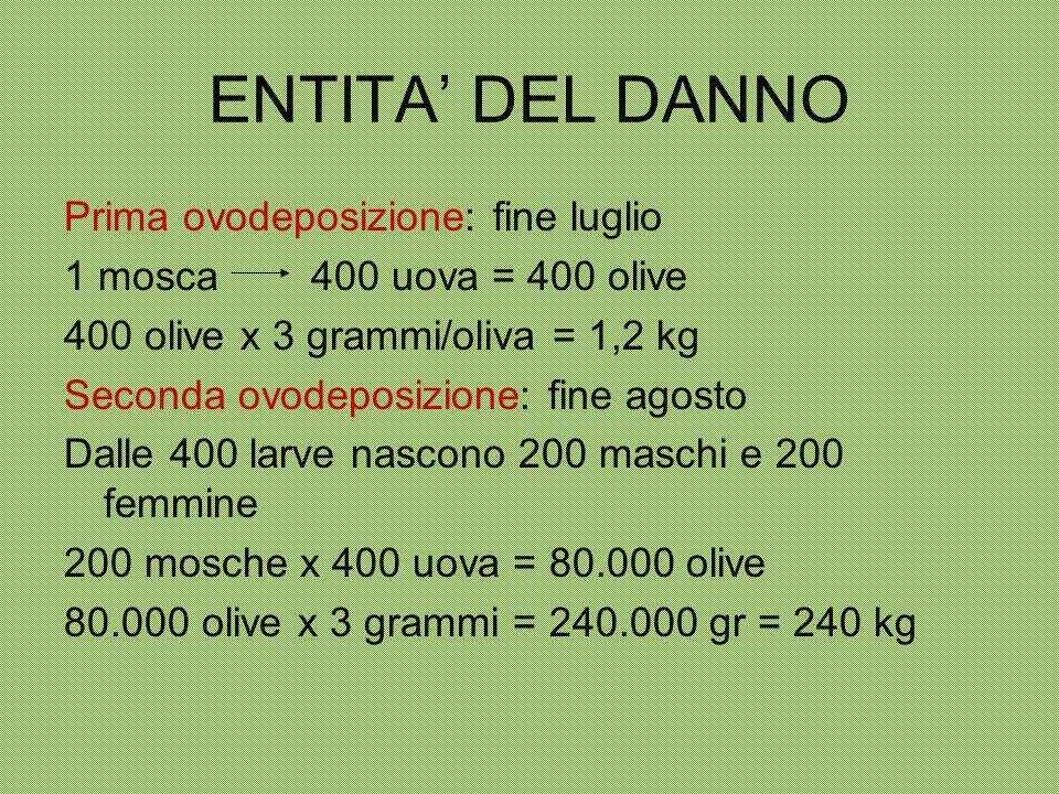 ENTITA' DEL DANNO Prima ovodeposizione: fine luglio 1 mosca 400 uova = 400 olive 400 olive x 3 grammi/oliva = 1,2 kg Seconda ovodeposizione: fine agos
