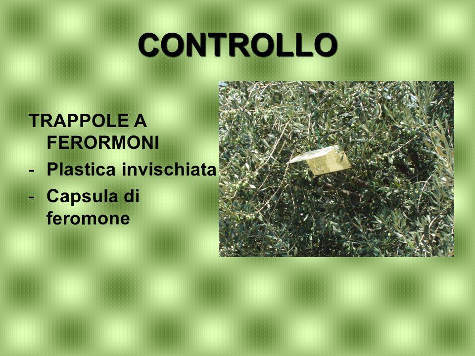 CONTROLLO TRAPPOLE A FERORMONI -Plastica invischiata -Capsula di feromone