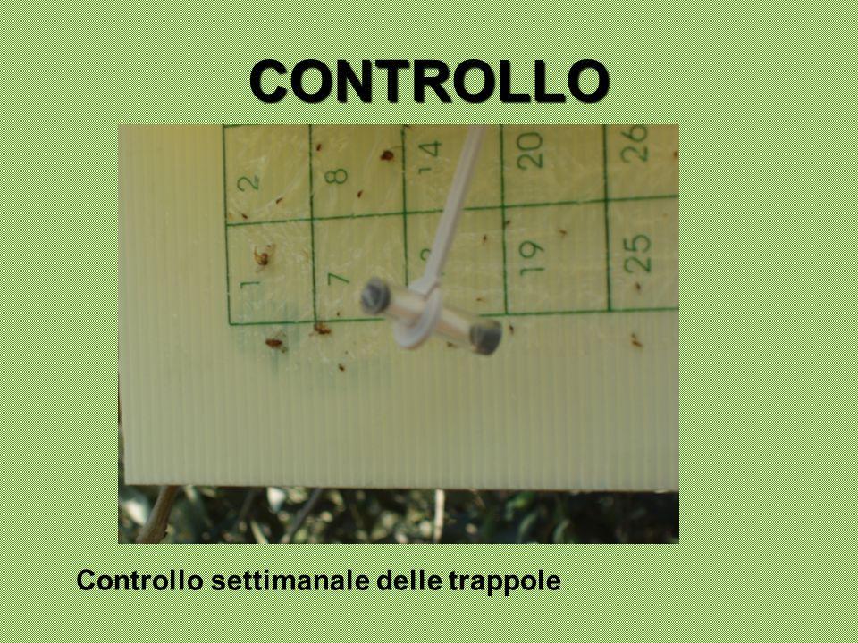 CONTROLLO Controllo settimanale delle trappole