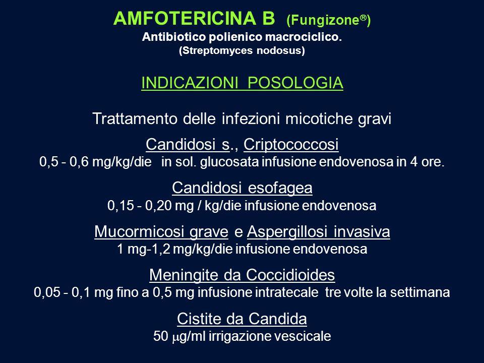 AMFOTERICINA B (Fungizone  ) Antibiotico polienico macrociclico. (Streptomyces nodosus) INDICAZIONI POSOLOGIA Trattamento delle infezioni micotiche g