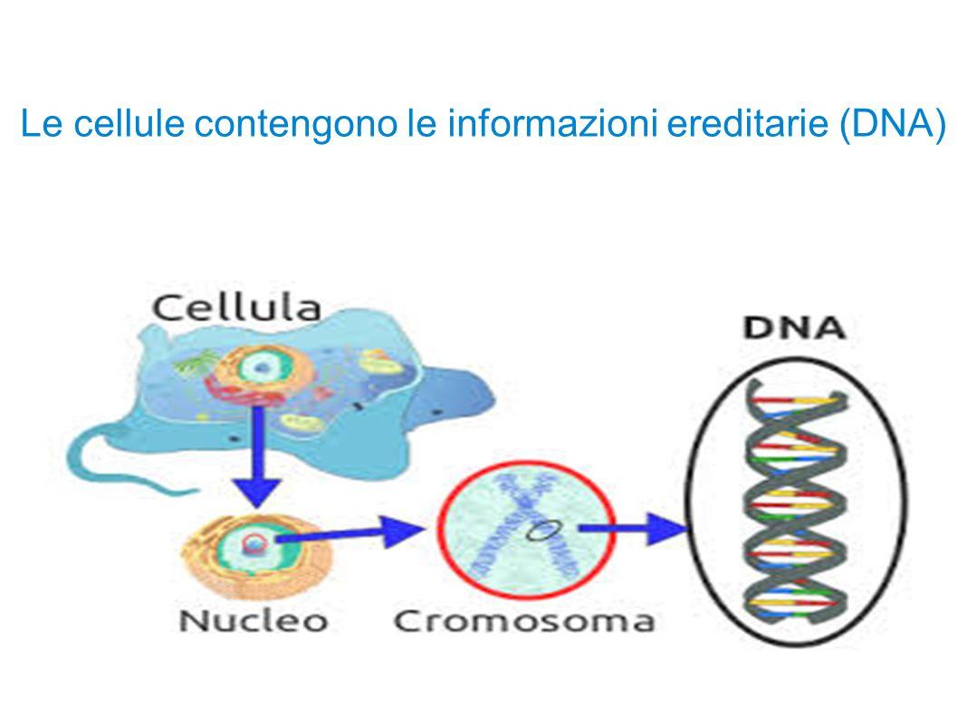 Gli esseri viventi sono fatti di cellule