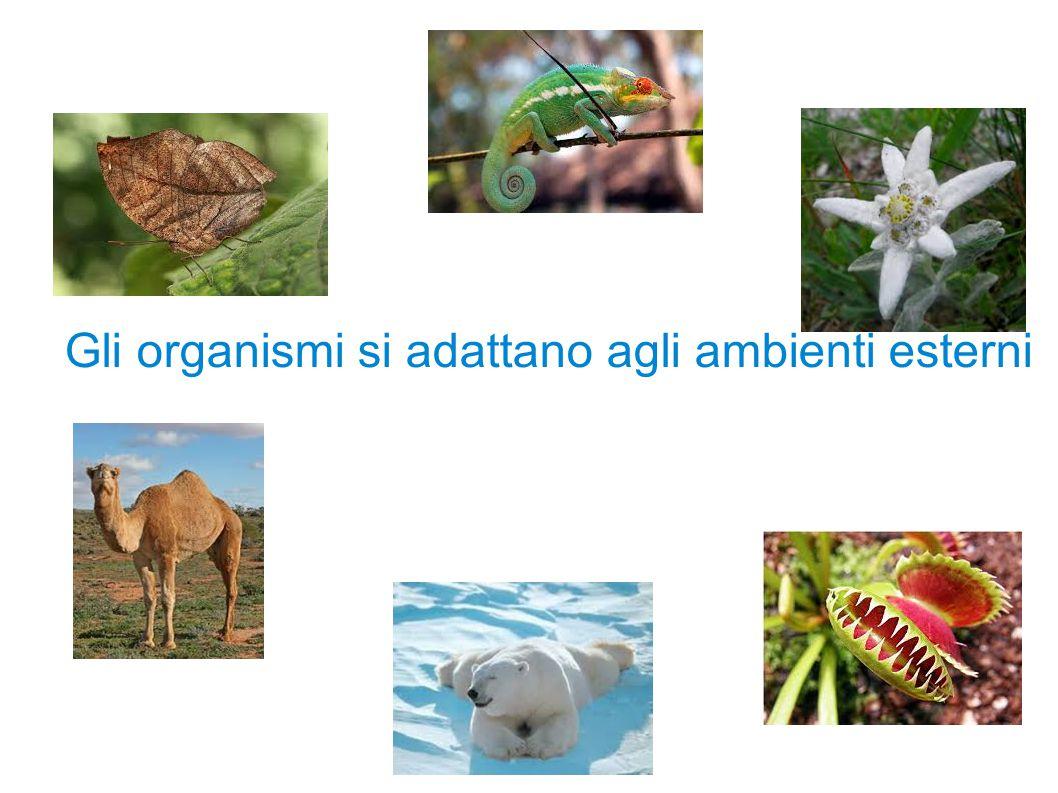 Gli organismi interagiscono con l ambiente esterno e rispondono agli stimoli