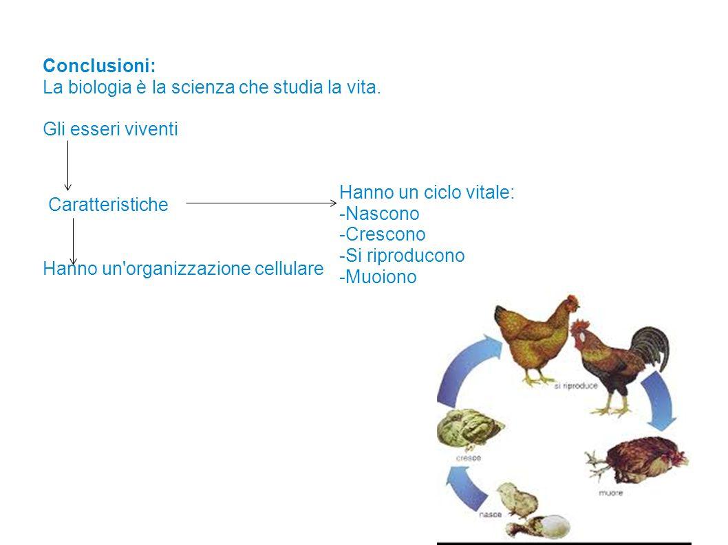 Gli organismi sono organizzati in livelli gerarchici