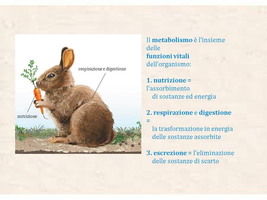 Come si possono distinguere gli organismi viventi dalle cose non viventi? Possiamo dire per esempio che soltanto i viventi hanno la mobilità, cioè la
