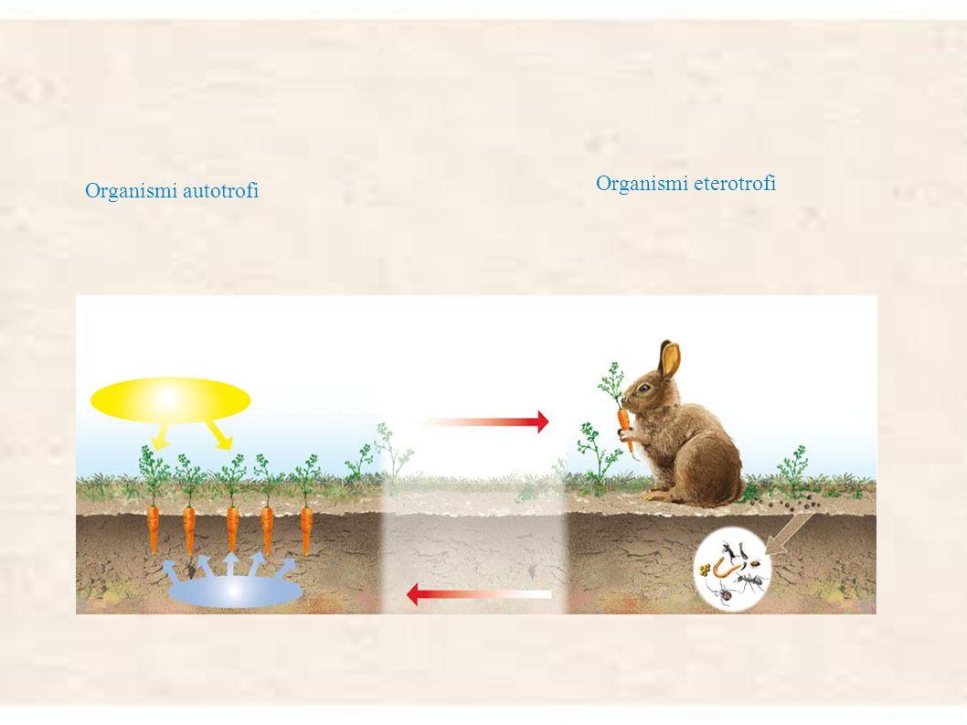 Le cellule degli animali e delle piante hanno in comune una struttura generale: membrana: separa la cellula dall'ambiente esterno citoplasma : una zon