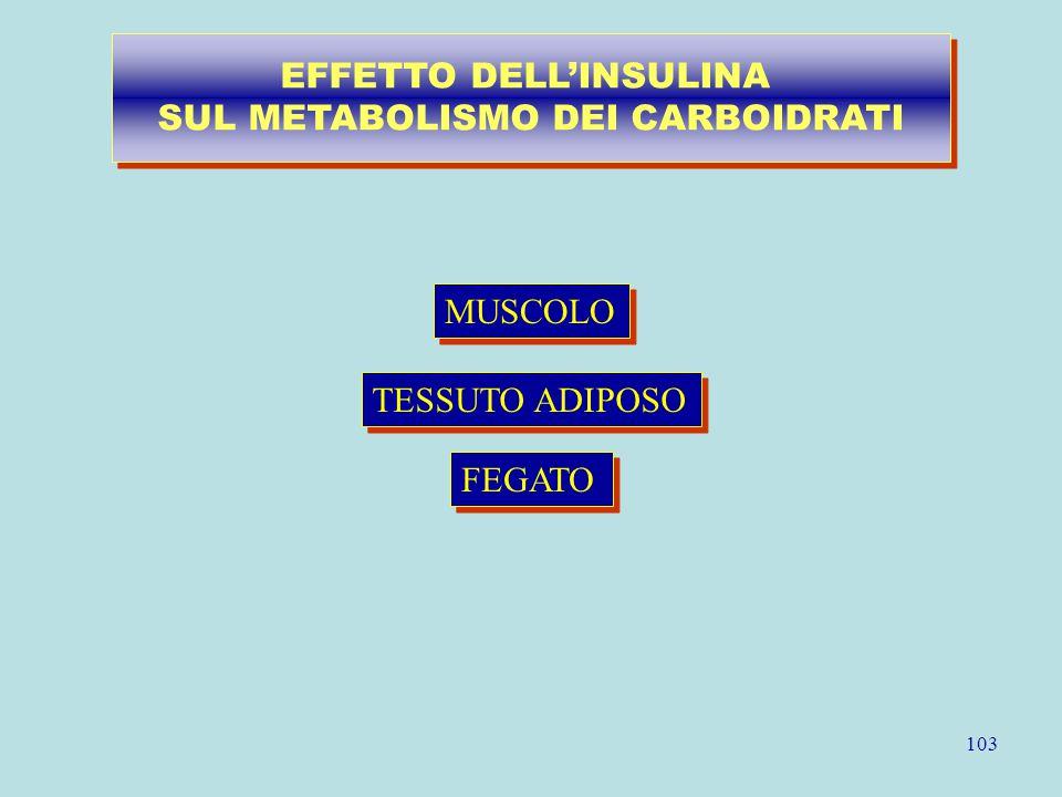 103 MUSCOLO TESSUTO ADIPOSO FEGATO EFFETTO DELL'INSULINA SUL METABOLISMO DEI CARBOIDRATI