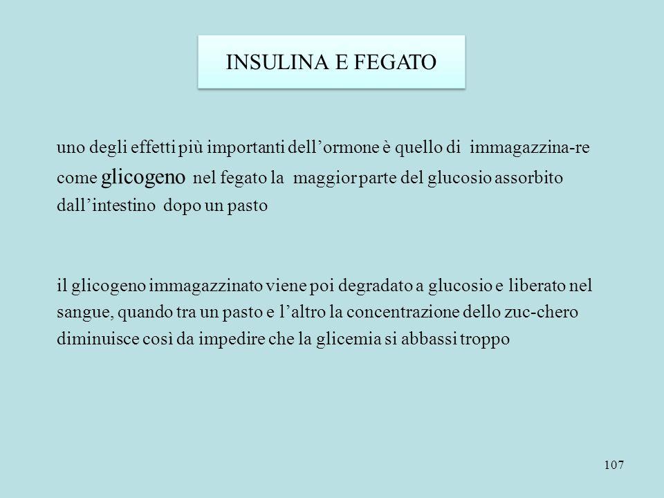 107 INSULINA E FEGATO uno degli effetti più importanti dell'ormone è quello di immagazzina-re come glicogeno nel fegato la maggior parte del glucosio
