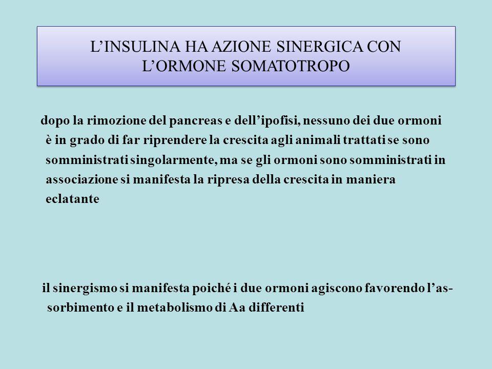 L'INSULINA HA AZIONE SINERGICA CON L'ORMONE SOMATOTROPO dopo la rimozione del pancreas e dell'ipofisi, nessuno dei due ormoni è in grado di far ripren