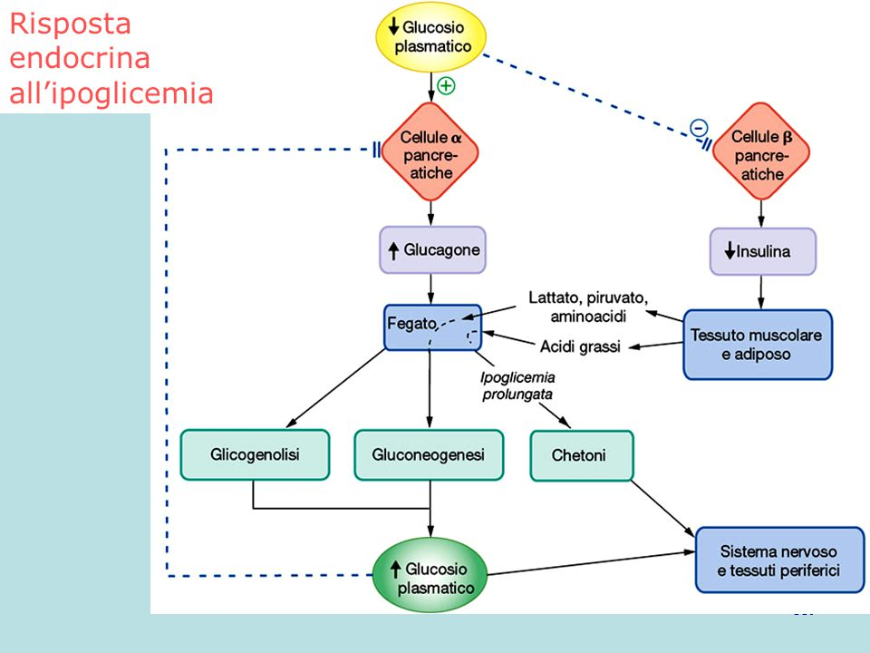 119 Risposta endocrina all'ipoglicemia