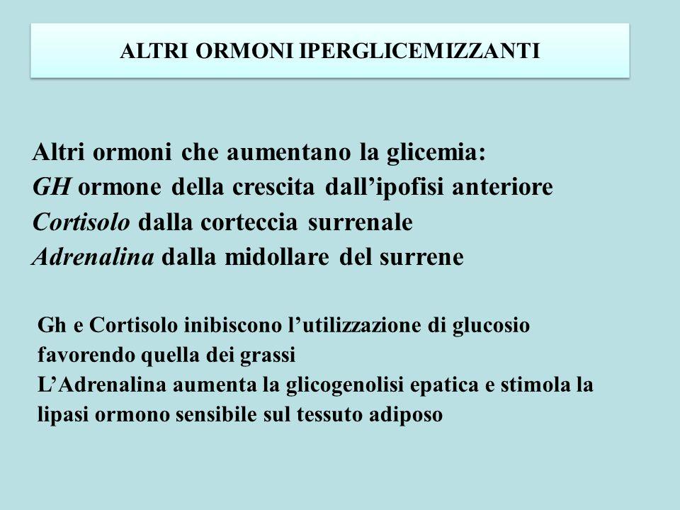 ALTRI ORMONI IPERGLICEMIZZANTI Altri ormoni che aumentano la glicemia: GH ormone della crescita dall'ipofisi anteriore Cortisolo dalla corteccia surre
