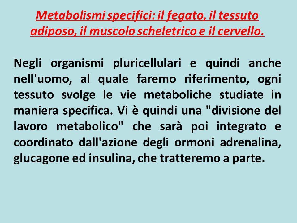 Composizione dell'organismo e delle riserve energetiche in un soggetto umano normale di 70 Kg Tipo di substrato tessutoPeso (Kg)% del peso corporeo Valore calorico (Kcal) LIPIDITessuto adiposo11-1715-25100.000-150.000 PROTEINETessuto muscolare (principalmente) 8-1212-1732.000-48.000 CarboidratiFegato (glicogeno)0.07<1280 Muscolo (glicogeno)0.2<1800 Sangue (glucosio)0.02<180 Riserve energetiche Tipo di substratoPeso (Kg)Valore calorico (Kcal) Glucosio0.0280 Acidi grassi liberi0.00033 triacilglicerolo0.00330 L'energia totale immediatamente disponibile dal plasma è estremamente bassa e basta per circa 80 min di metabolismo basale (1800 Kcal/giorno)