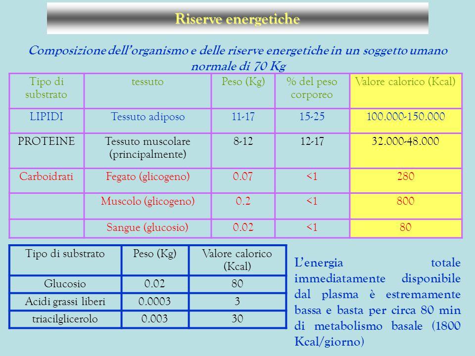 Composizione dell'organismo e delle riserve energetiche in un soggetto umano normale di 70 Kg Tipo di substrato tessutoPeso (Kg)% del peso corporeo Va