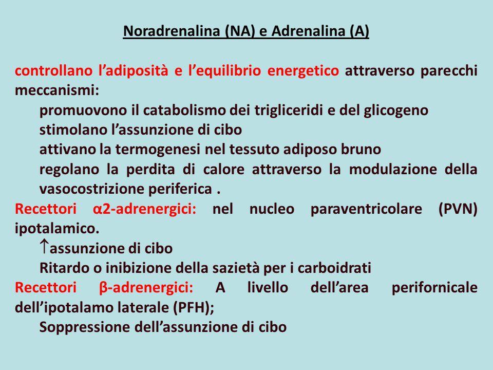 Noradrenalina (NA) e Adrenalina (A) controllano l'adiposità e l'equilibrio energetico attraverso parecchi meccanismi: promuovono il catabolismo dei tr