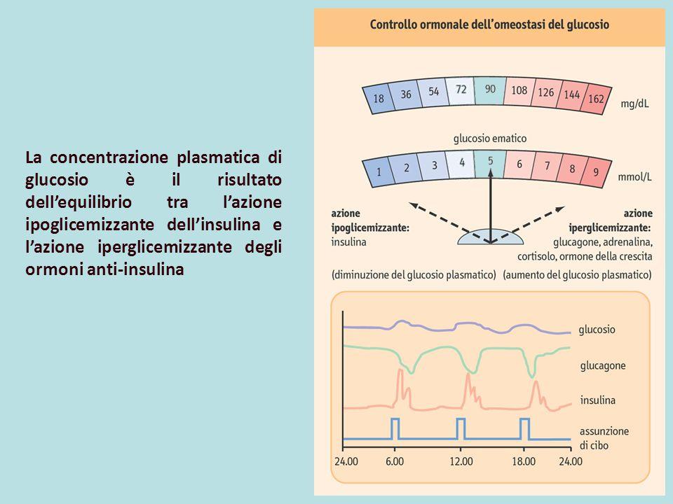 La concentrazione plasmatica di glucosio è il risultato dell'equilibrio tra l'azione ipoglicemizzante dell'insulina e l'azione iperglicemizzante degli