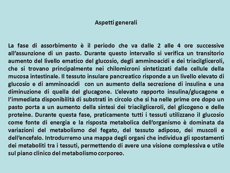 Il metabolismo dei carboidrati: il trasporto del glucosio dentro gli adipociti e il suo successivo metabolismo sono depressi a causa del basso livello di insulina in circolo.