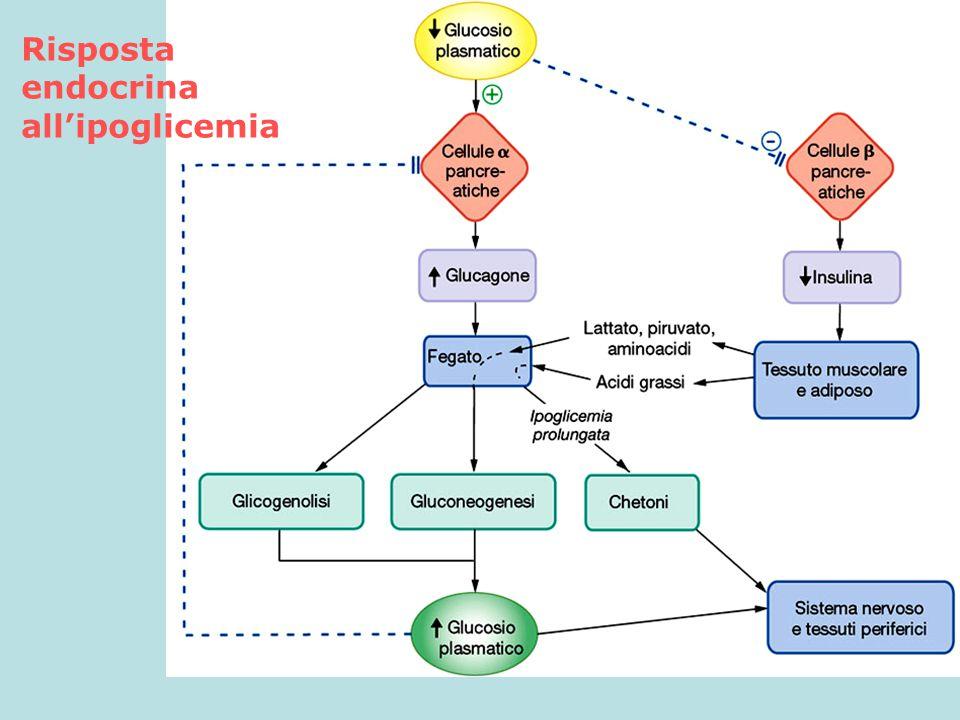 Risposta endocrina all'ipoglicemia