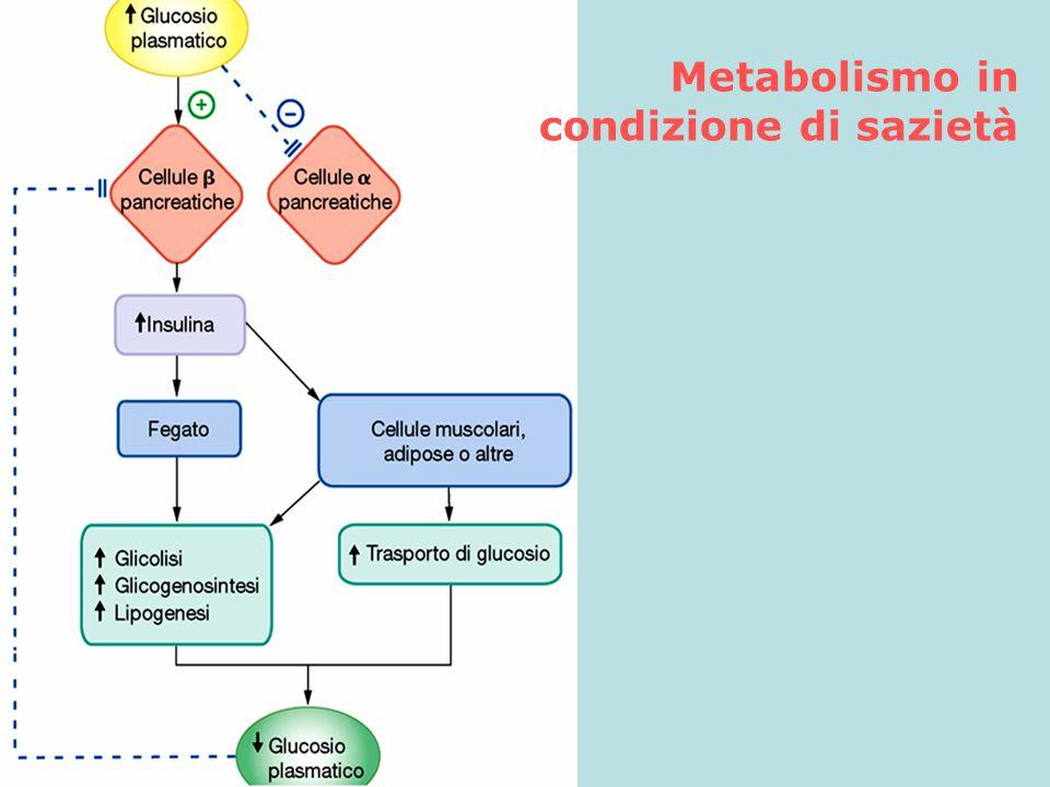 Metabolismo in condizione di sazietà