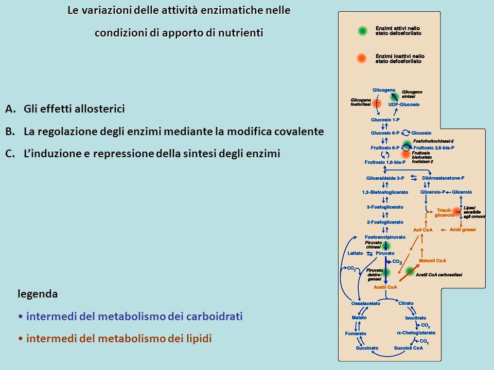 A.Gli effetti allosterici B.La regolazione degli enzimi mediante la modifica covalente C.L'induzione e repressione della sintesi degli enzimi Le varia