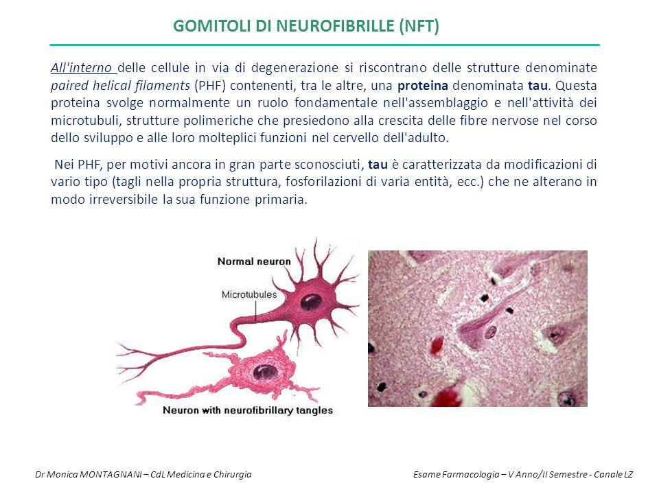 GOMITOLI DI NEUROFIBRILLE (NFT) All'interno delle cellule in via di degenerazione si riscontrano delle strutture denominate paired helical filaments (