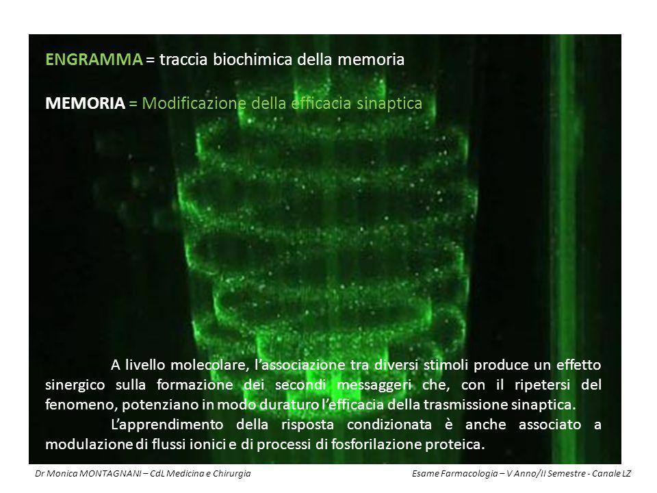 ENGRAMMA = traccia biochimica della memoria MEMORIA = Modificazione della efficacia sinaptica A livello molecolare, l'associazione tra diversi stimoli