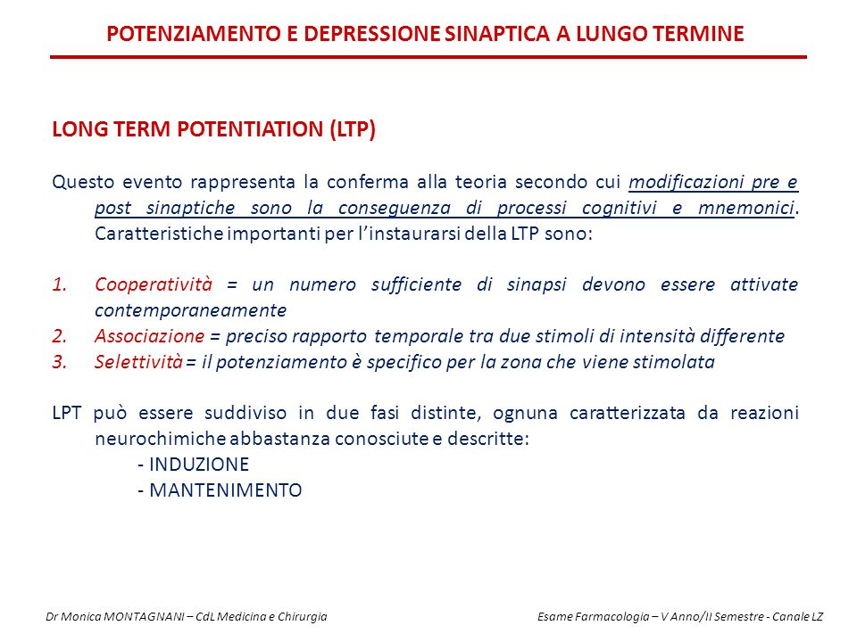 POTENZIAMENTO E DEPRESSIONE SINAPTICA A LUNGO TERMINE LONG TERM POTENTIATION (LTP) Questo evento rappresenta la conferma alla teoria secondo cui modif
