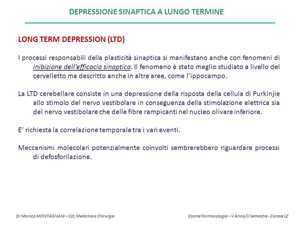 DEPRESSIONE SINAPTICA A LUNGO TERMINE LONG TERM DEPRESSION (LTD) I processi responsabili della plasticità sinaptica si manifestano anche con fenomeni