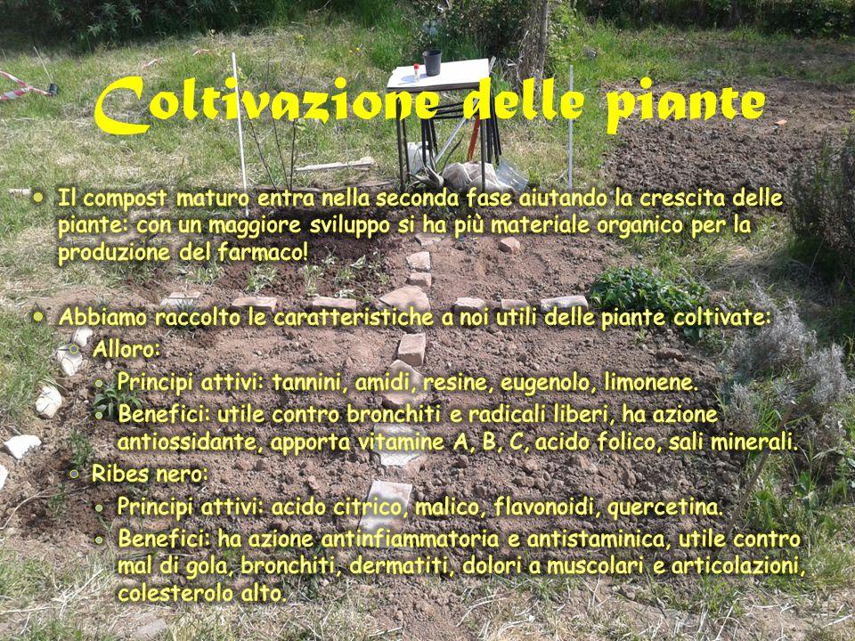 Coltivazione delle piante