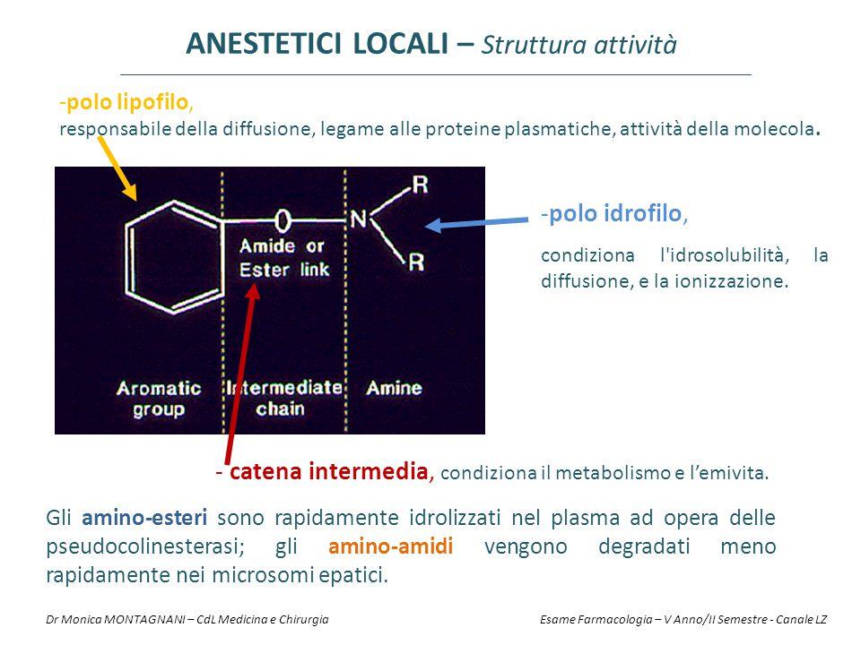 -polo lipofilo, responsabile della diffusione, legame alle proteine plasmatiche, attività della molecola. -polo idrofilo, condiziona l'idrosolubilità,